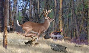 spooked deer,bear,turkey
